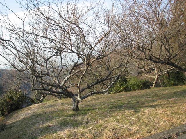 高尾(こうお)の邸宅跡